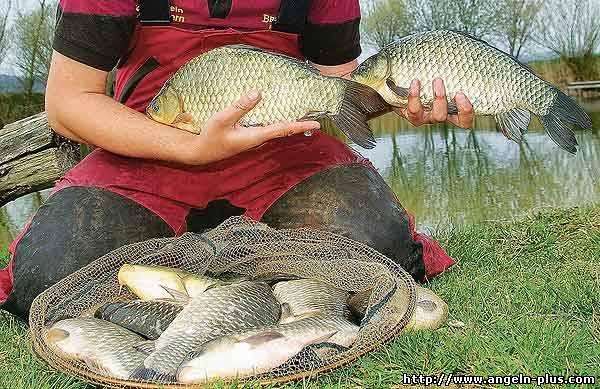рыбалка на карася в коряжнике